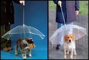 Зонтик для собак и кошек,  зонт для животных