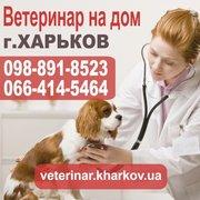 Вызов ветеринара на дом в Харькове